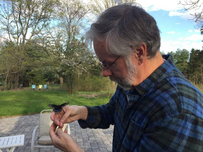 Yale Peabody Museum's education coordinator Jim Sirch now writes a nature blog with a hyper-local flair for our southern New England environs. Here, he releases a newly hatched black swallowtail butterfly. Photo courtesy of Jim Sirch